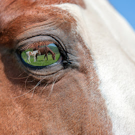 In the eye of a horse by Michel Bissonnette - Animals Horses ( reflection in a horse`s eye, horse head shot, horses,  )