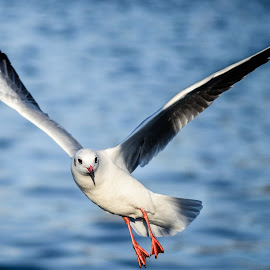 Open your mind by Mihaela Iordan - Animals Birds ( seagull, fly, air, seascape, birds,  )