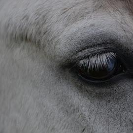by Kelly Joeri Janssens Crabbé - Animals Horses