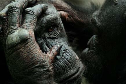 Awesome animal photos by Marina Cano