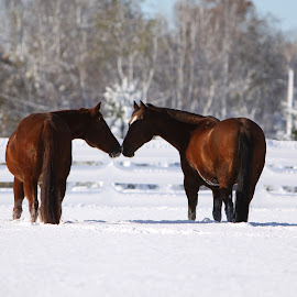 You And Me by Mike Craig - Animals Horses