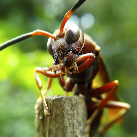 red wasp by Hendrata Yoga Surya - Instagram & Mobile Android