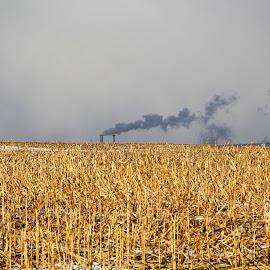by Jazz Johnson - Landscapes Prairies, Meadows & Fields