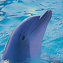 Dolphin Sound Effects icon