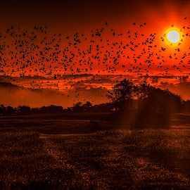 Flying at Dawn by Troy Snider - Landscapes Mountains & Hills ( flock of birds, orange, sunrises, breath taking, birds, flock, orange light, bird, first light, dawn, magical, dramatic, sunrise )