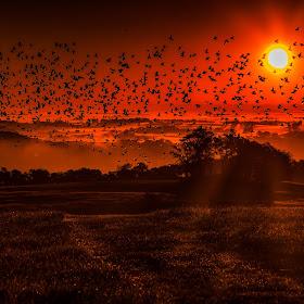 Flying at Dawn.jpg