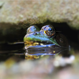 Gimme Shelter by Dennis Ba - Animals Amphibians