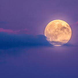 supermoon  rising as sun sets 2014 by Catherine Casey - News & Events World Events ( moon, supermoon )