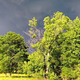 Arkansas Storms by Sunni Davis - Novices Only Landscapes