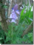 garden bluebell paint soft smudges