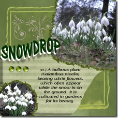 snowdrop Medium Web view