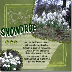 snowdrop Medium Web view