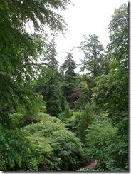 dawyck trees