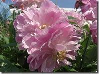 ingliston flowers