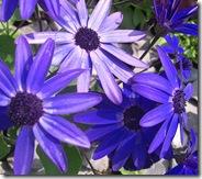 ingliston flowers 4a