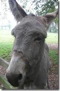 donkey cofi