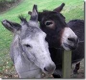 donkey pals