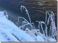 cuddy ice and grasses