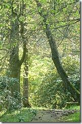 kailzie woodland