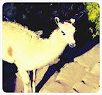 llama colourcross