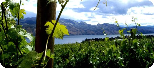 wine tasting in the naramata bench