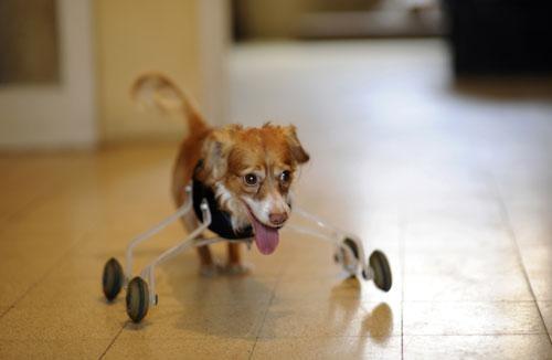 roller-dog