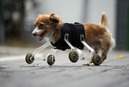 roller-dog3