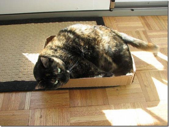 fat_cats_40