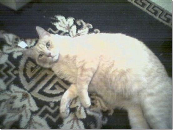 fat_cats_27