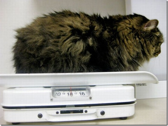 fat_cats_01