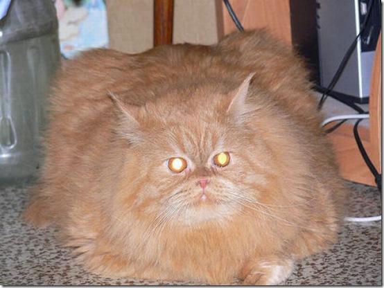 fat_cats_03