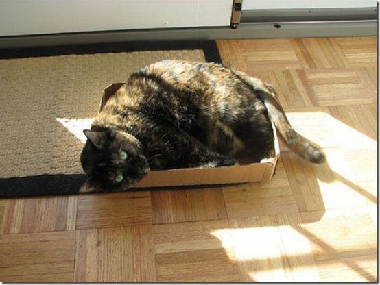 fat_cats_17