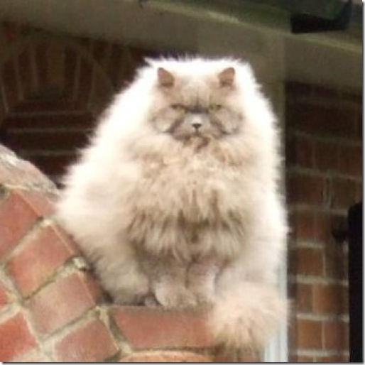 fat_cats_55