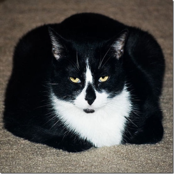 fat_cats_56