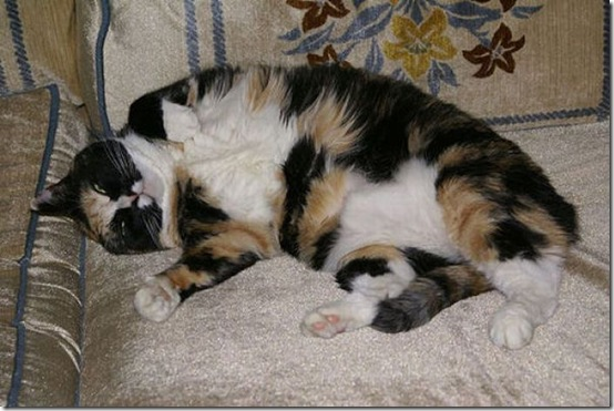fat_cats_20