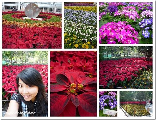 kowloon park-4