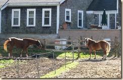 WK 2 Horses