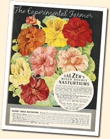 Salzer flowers 2
