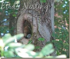 08 13 Tree nest