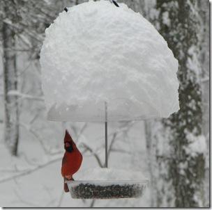 01 12 Cardinal