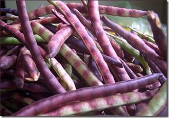 purplehull-peas-2008