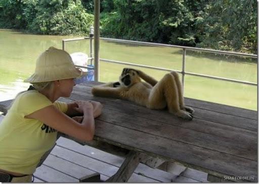 funniest-monkey