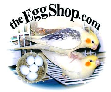 eggs_logo_web366_new