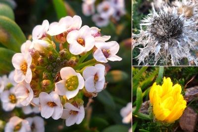 Ver flor