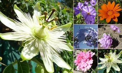 Ver flores vimeiro 2