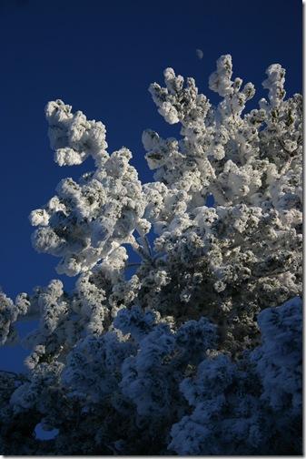 -7ºC. Sierra de Fonfría