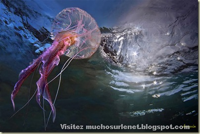 Monde animal-méduse