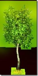 _a_tree5