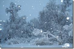wintersnow 004