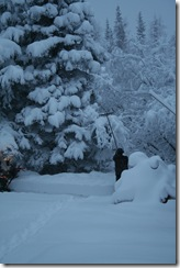 wintersnow 012